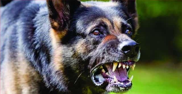 aggressive-dog-animal-repellent.jpg